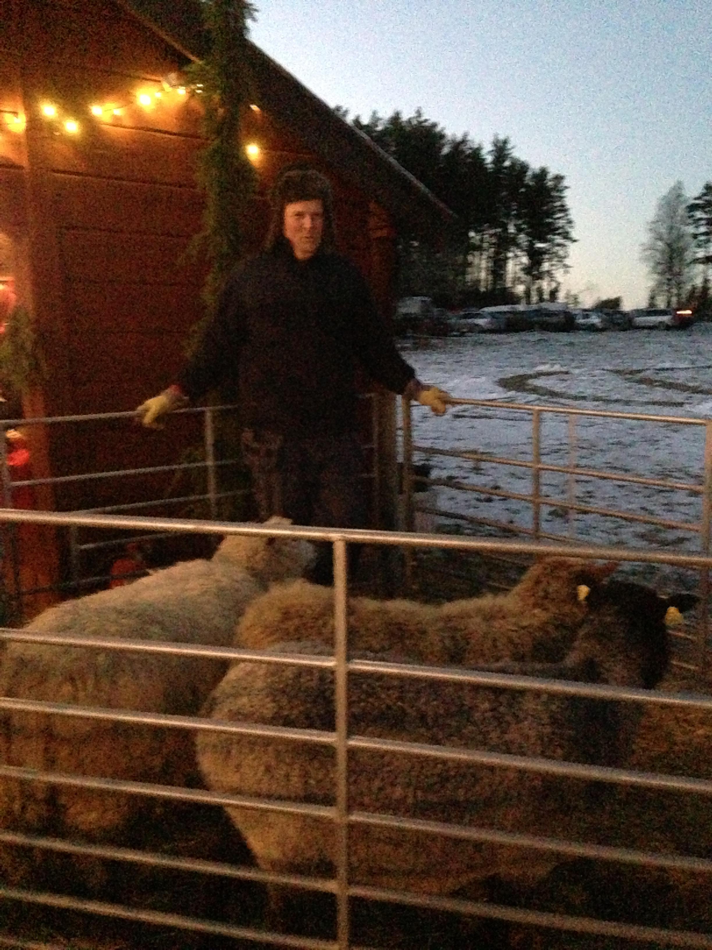 Ulf Hellgren och hans får