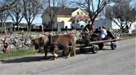 En tur med häst och vagn