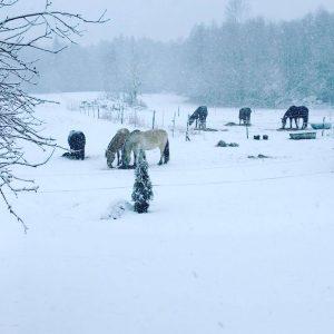 vinter i Kärr